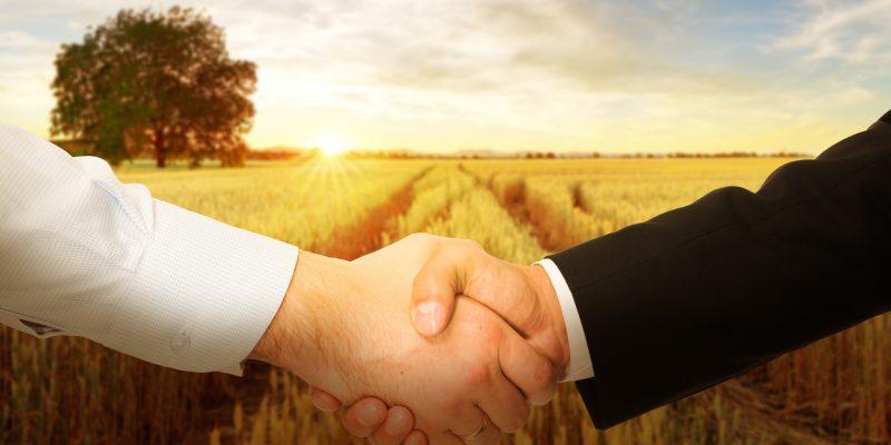 Seedz e Markestrat firmam parceria